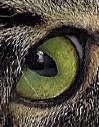 院長の猫の目ブログ